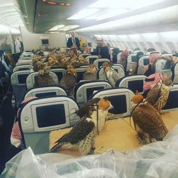 Os gaviões nas poltronas do avião.